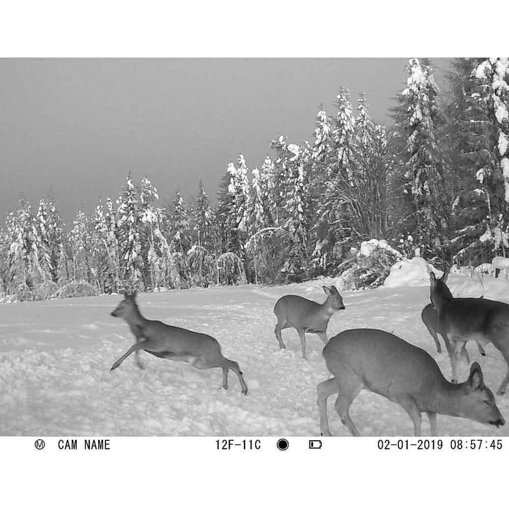 Fototrappola Abbandono Rifiuti Professionale 30 Megapixel - IP68 - WN-30S